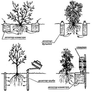 схема капельного полива под корень растения